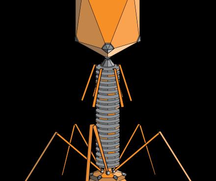 bacteriofago