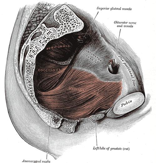 supositorios para inflamación de la próstata
