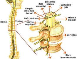 lesion medular